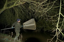 Bumper elver catches image